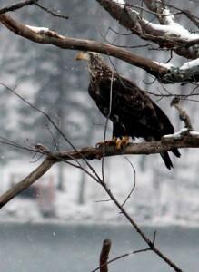 Eagle 2_9688